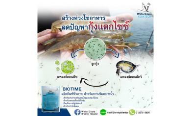 ป้องกันแบคทีเรียก่อโรคในระบบทางเดินอาหาร